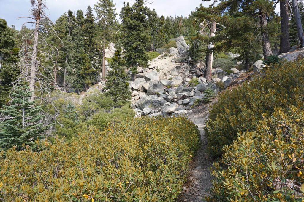 DeziStyle Siberia Creek Trail